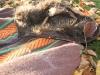 braunbaer-kapuze